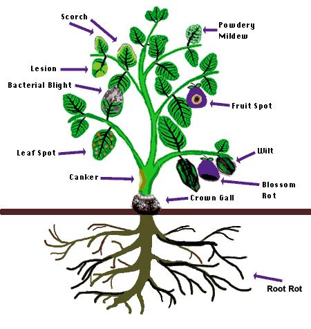 Diagnosing Sick Plants | Ohioline