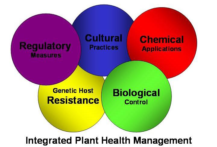 Keeping Plants Healthy Ohioline
