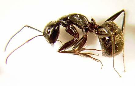 black ants and buddhist pdf