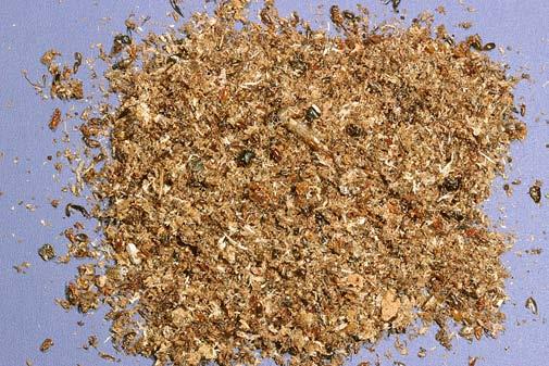 Carpenter Ants Sawdust Piles ~ Carpenter ants ohioline