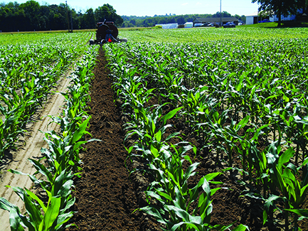 Photo of a farmer tilling between rows in a corn field and spraying.