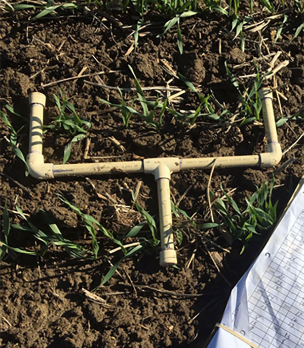 """Measurement tool made of pipes shaped like a goal post on the ground with about ten stems between the """"goal posts""""."""