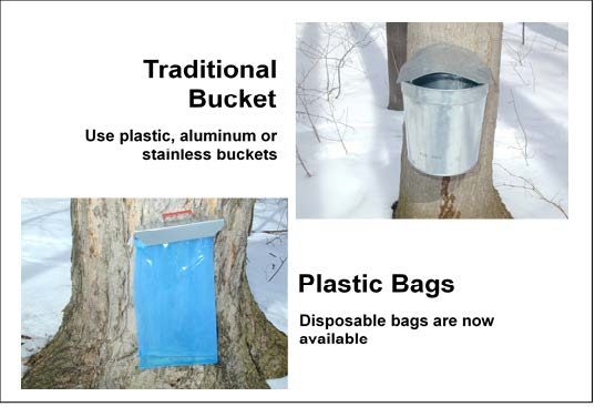Use plastic, aluminum or stainless steel buckets to college sap. Or, disposable plastic bags are now available.