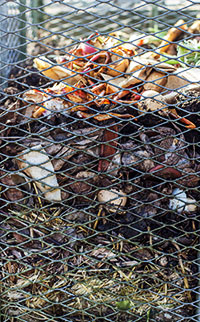 View through wire into a compost bin with new vegetable and fruit scraps on top of old compost.