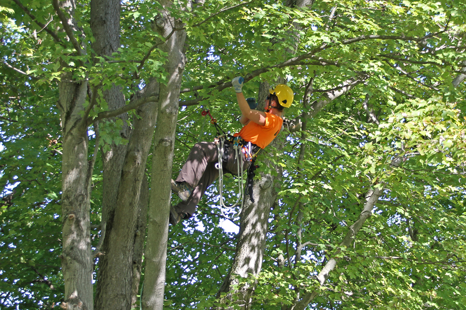 Man in a yellow hardhat and orange shirt trimming a tree
