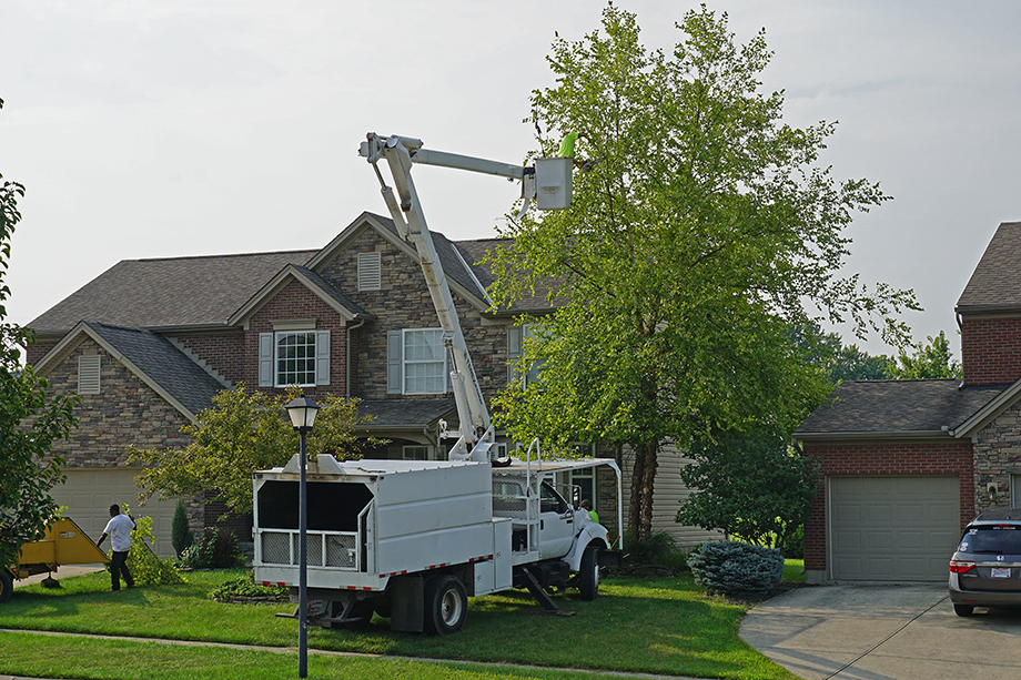 Bucket truck with an arborist trimming branches toward the top