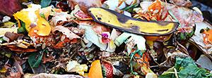 Rotten banana peels, strawberries, orange peels, and other refuse.
