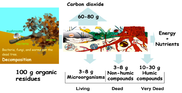Understanding Soil Microbes And Nutrient Recycling