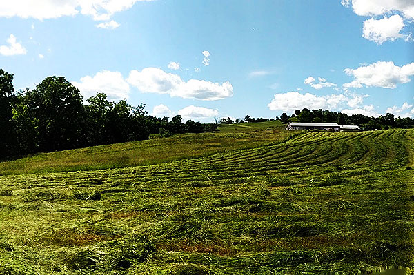 Mowed pasture with green trees, blue sky with clouds, and a white building in the distance.
