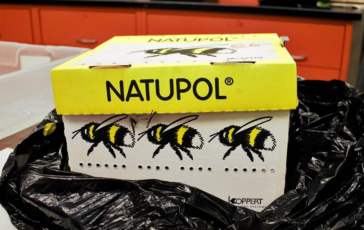 Artificial bee nest from Natupol