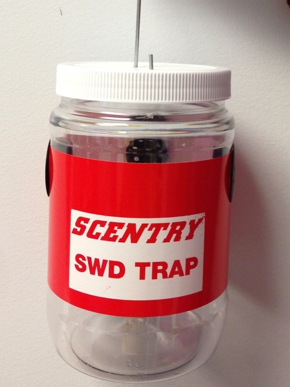 Commercial trap for SWD