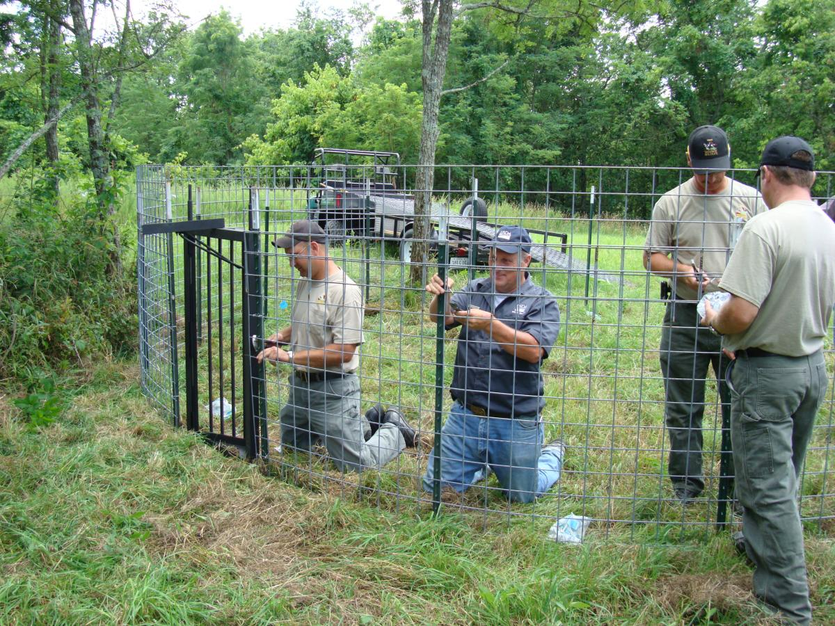 Feral Swine In Ohio Managing Damage And Conflicts Ohioline