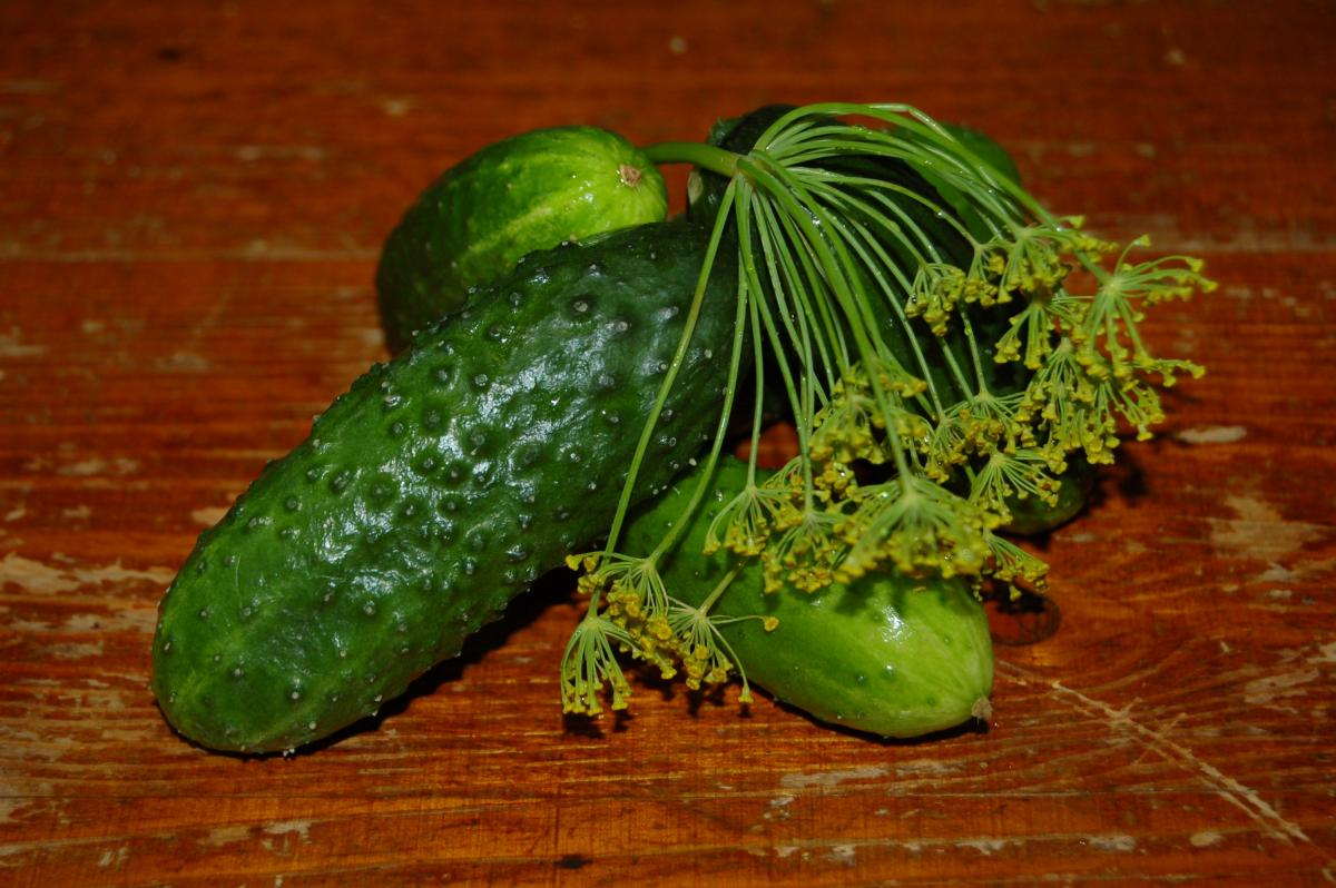 Cucumber emerald flow. Description of a variety of cucumbers