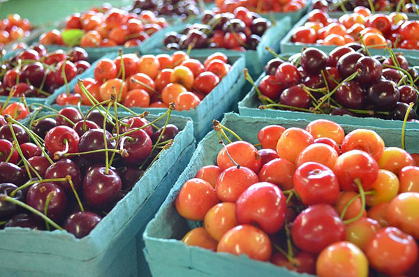 Dark purple and yellow to light red cherries on display in quart containers.