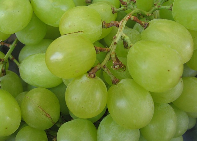 Close up of green grapes on stem.