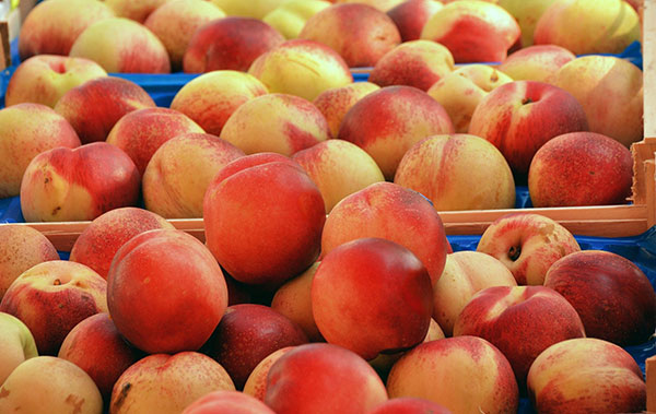 Trays displaying harvested peaches.