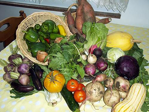 Tomatoes, squash, zucchini, onions, root vegetables in a CSA share