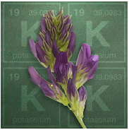 App icon for Alfalfa Potassium Calculator
