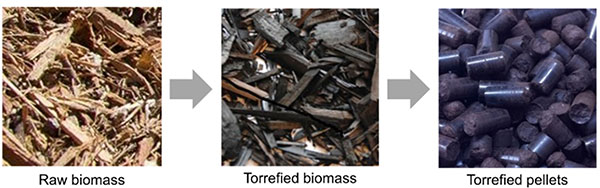 """Three photos with arrows between them showing how wooden chips and splinters called """"raw biomass"""" in photo 1, are heated and blackened into """"torrified biomass"""" in photo 2, and finally compressed into blackened pellets called """"torrefied pellets"""" in photo 3."""