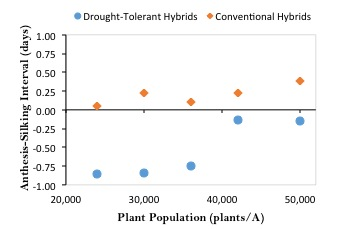 anthesis silking interval drought tolerance