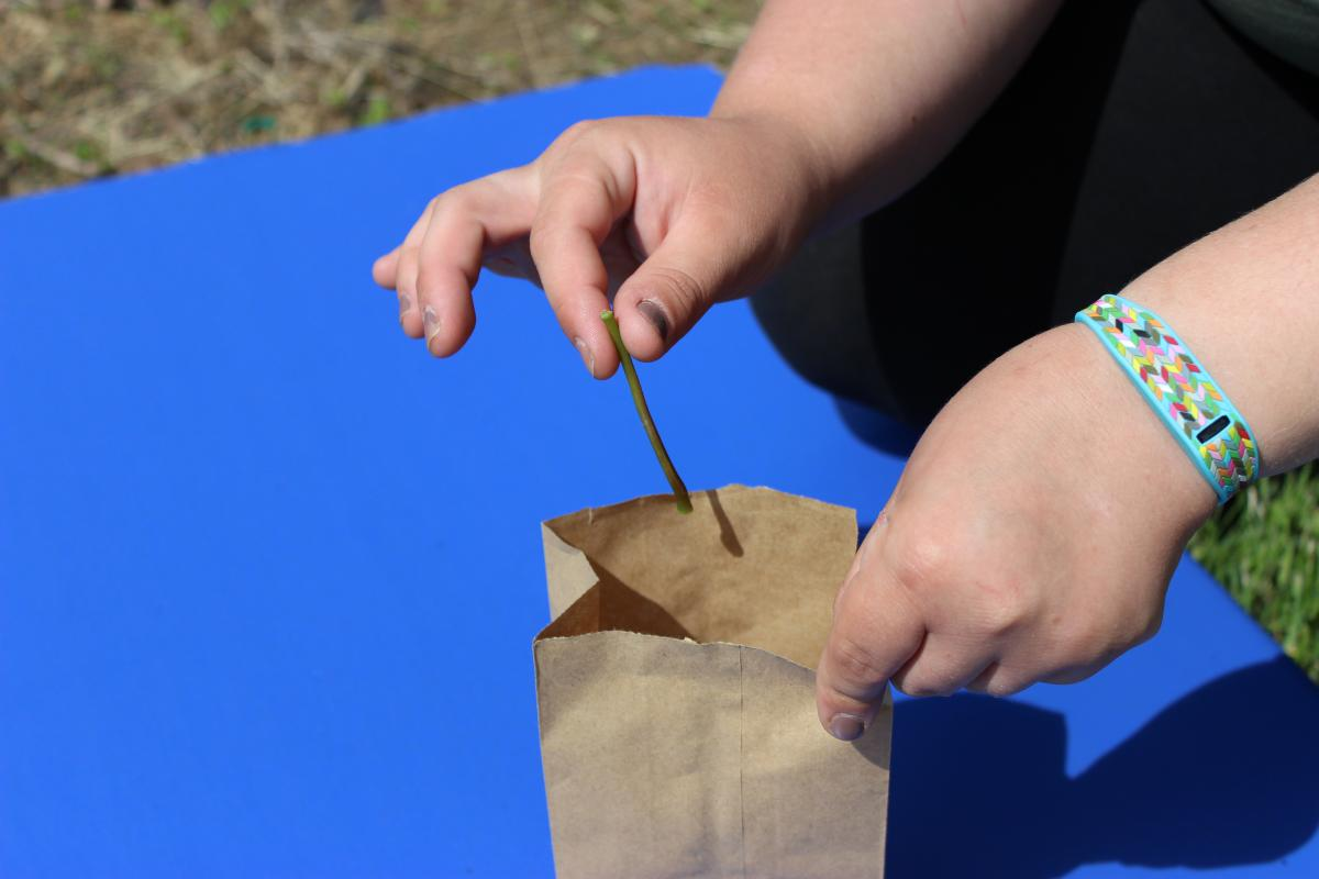 Hand dropping petiole into a brown bag on a blue background