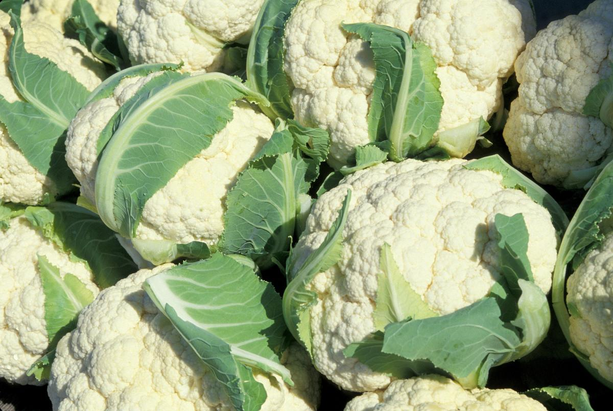 Harvested cauliflower curd with wrapper leaves