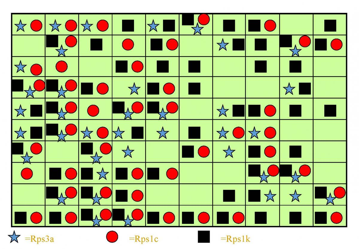 P. sojae population grid with stars, circles and squares to represent where P. sojae killed plants with Rps gene.
