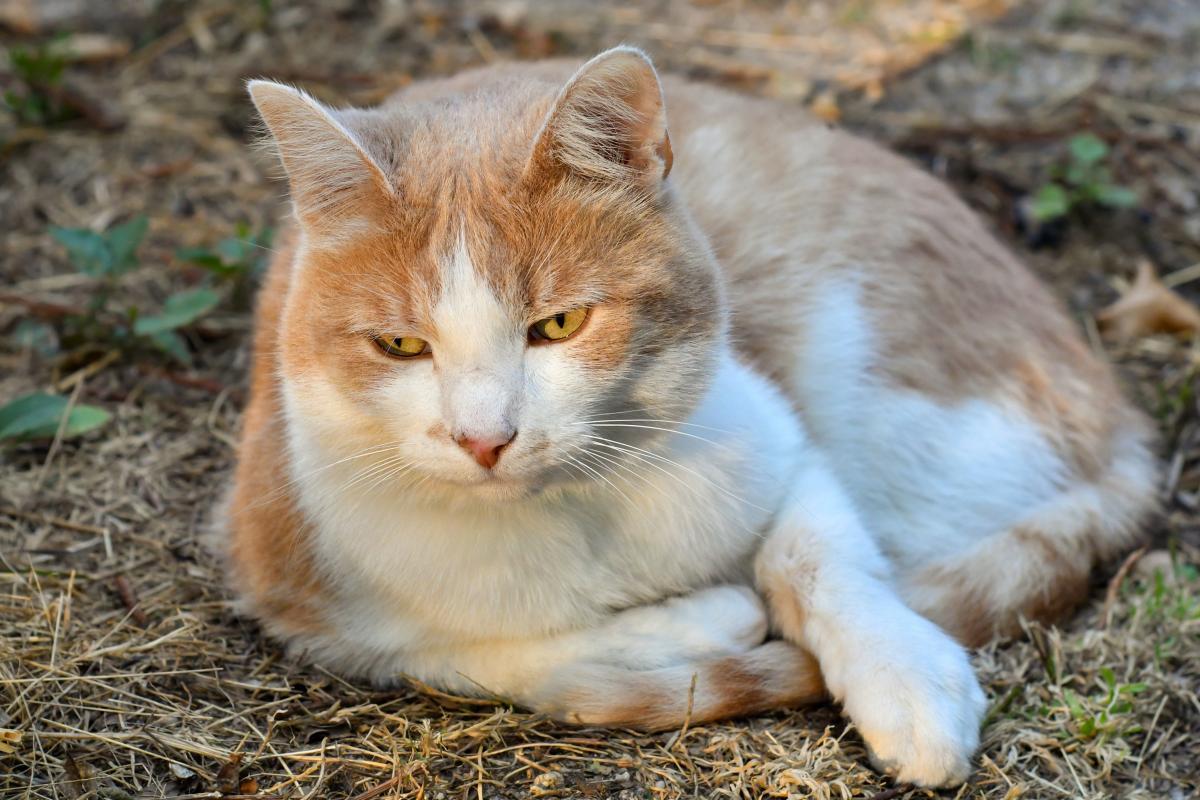 Domestic cat outside